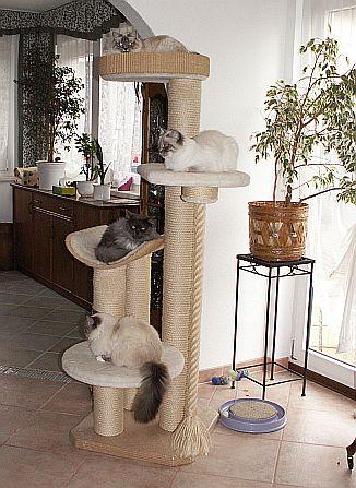 katzenhaltung pflege marina handke birma katzen kreuzhorst aus springe bei hannover. Black Bedroom Furniture Sets. Home Design Ideas